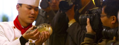 cocinero pez globo