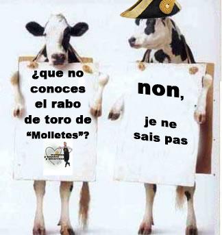 vacas copia