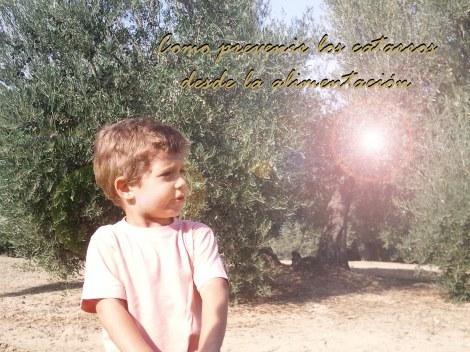 Peque entre olivos